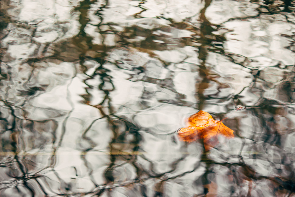 Single orange chestnut leaf drifting on the water surface between rippled shadows