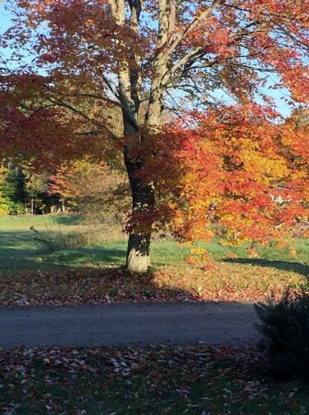 fall foliage 10-12-15 (720x960) (2)