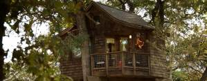 The Treehouse