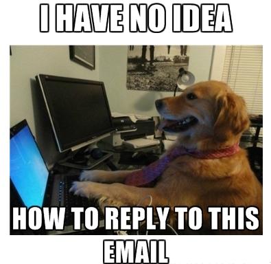 I have no idea dog