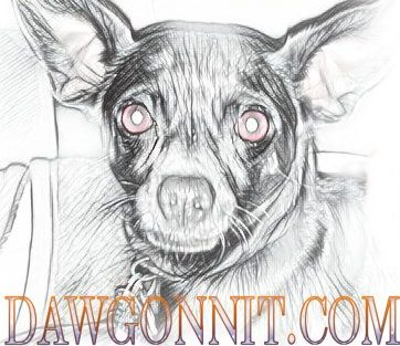 Dawgonnit-Dawg's Blog