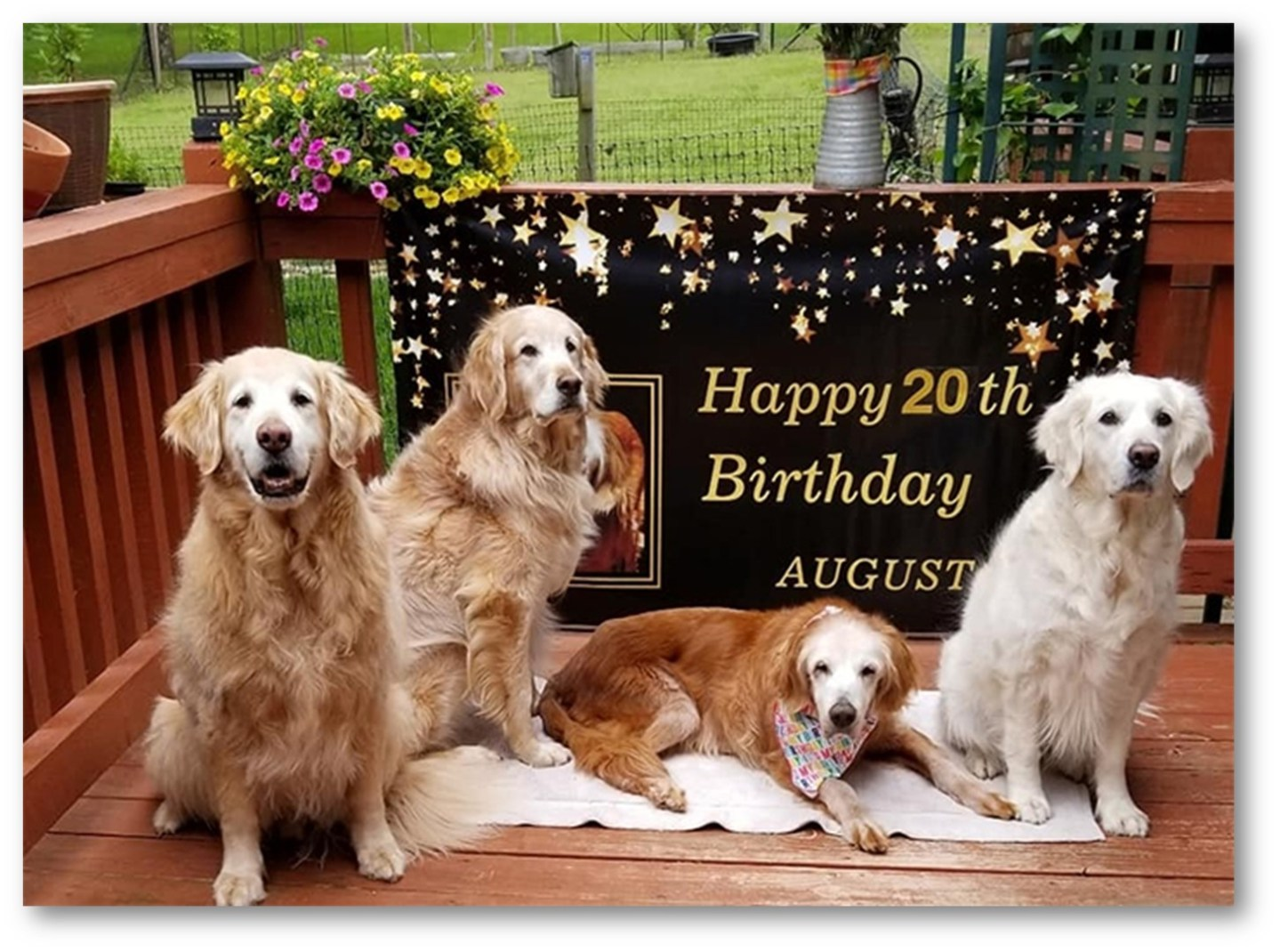 OLDEST LIVING GOLDEN RETRIEVER