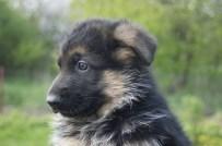 puppy-1359653_1280