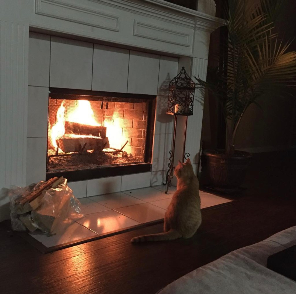 kitty and fireplace
