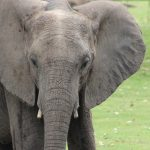 elephant-20-crop