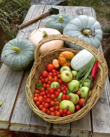 Dawn Whitehand fresh vegetables