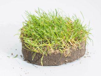 So sieht das persönliche Stück Dynamo Rasen aus. Foto: Norbert Neumann
