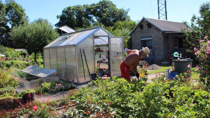 """Gartenfreund Peter (71) bei der Arbeit. In seinem Gewächshaus zieht er für seine Gartengemeinschaft im KGV """"Lockwitz"""" Pflanzen vor. Foto: Verena Andreas"""