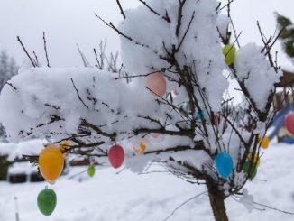 Schnee liegt auf einem mit Ostereiern geschmückten Baum. Foto: Bernd März