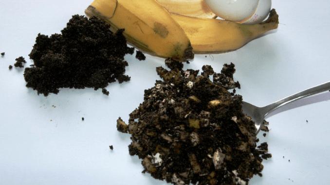 Bananenschalen, Eierschalen und Kaffeesatz können prima als Pflanzendünger verwendet werden. Foto: Jörg Hennig