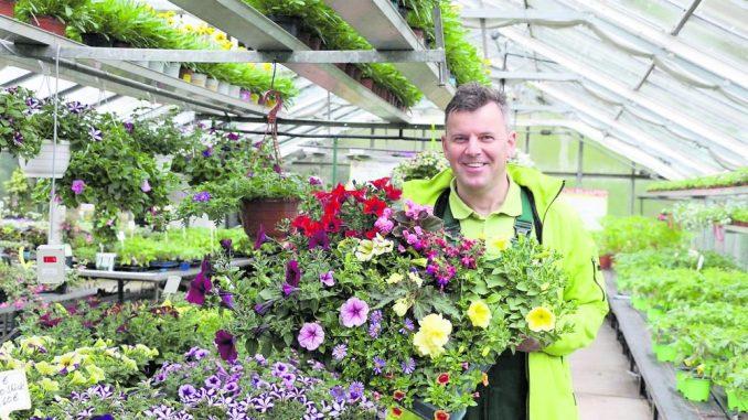 Jetzt kann der Sommer kommen! In den sächsischen Gärtnereien und Baumschulen steht die mit großer Sorgfalt produzierte beet- und Balkonware zum Verkauf bereit. (Foto: LV Gartenbau)
