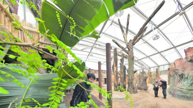 Mehr Platz für Elefanten im neuen Afrika-Haus. Foto: Rene Meinig Foto: Rene Meinig / /