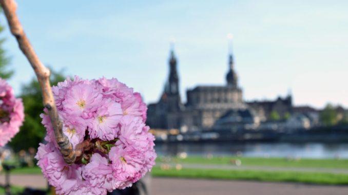 Blütenball vor der berühmten Dresden Silhouette. (Foto DAWO! /jz)