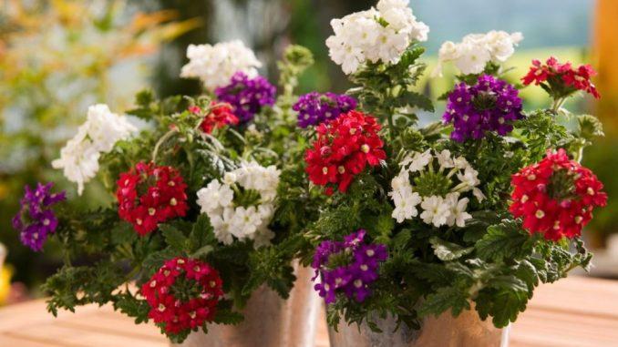 Bunte Blumen und tolle Ideen für Balkon, Garten und Küche: Das gibt es bei Jungpflanzen Kühne. Foto: PR