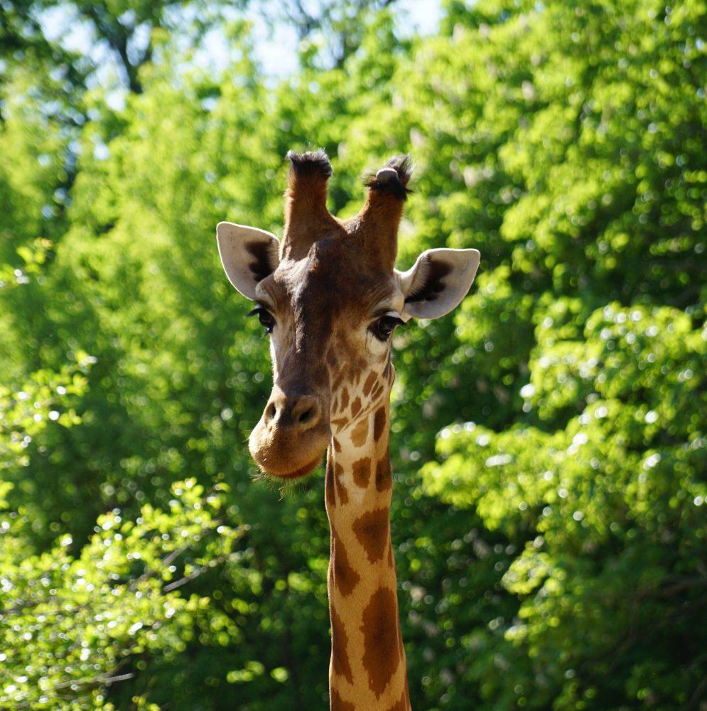 Tierischer Sommer im Dresdner Zoo