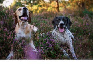 Max und Malina werden heute am Tag des Hundes noch mehr verwöhnt als sonst. Foto: privat