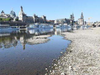Die Elbe hatte in dieser Woche einen Pegelstand von 45 Zentimetern. Normal sind 175 Zentimeter. (Foto: Juliane Zönnchen)