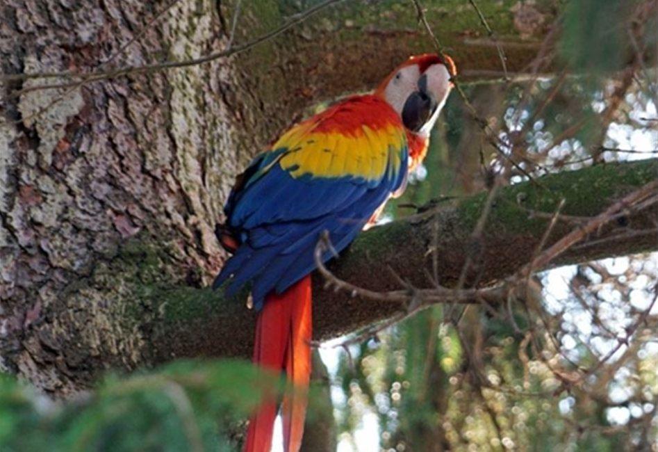 Vögel aus Dresdner Zoo ausgebüchst - Aras weiter auf der Flucht