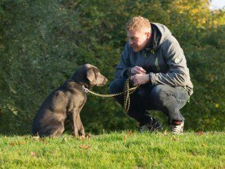 Tierärztekongress stellt Rasselisten in Frage. Stattdessen sollten auch die Halter der Tiere einer Prüfung unterzogen werden, so der Verband. (Foto: Pixabay)