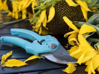 Im Herbst schneidet man u.a. auch abgeblühte Pflanzen zurück. (Foto: pixabay)