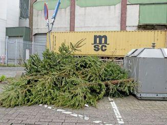 Weihnachtsbaum Dawo