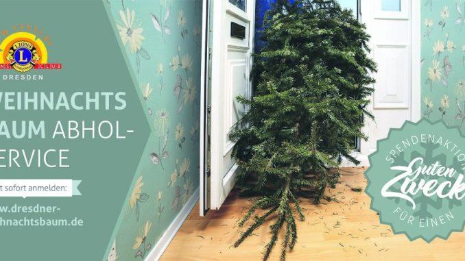 Große Weihnachtsbaumabholaktion Am 5 Januar Dawo