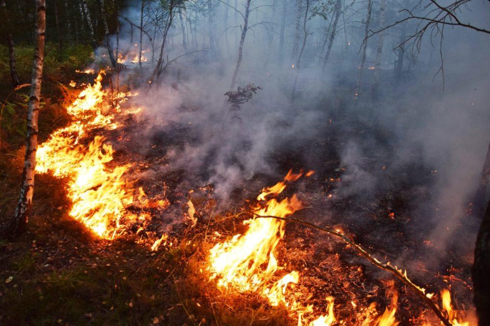 Hohe Waldbrandgefahr bei Osterfeuer beachten