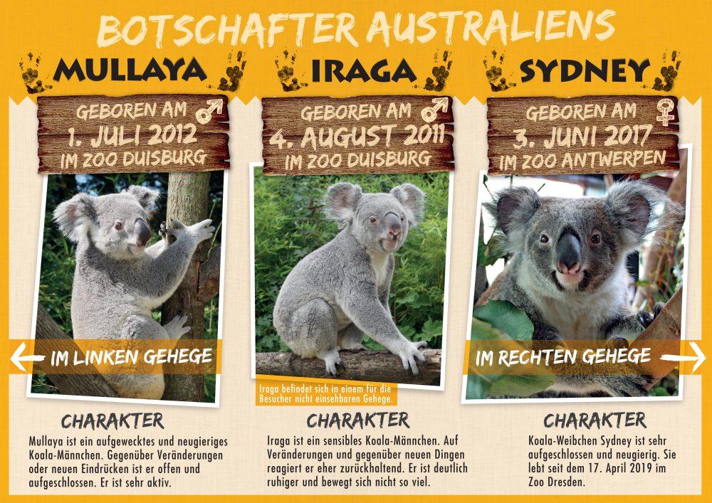 Koalasteckbrief__Alle_A3quer_160419.ai