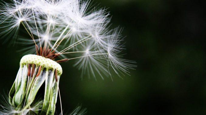 Den Allergien auf der Spur. Foto: Pixabay