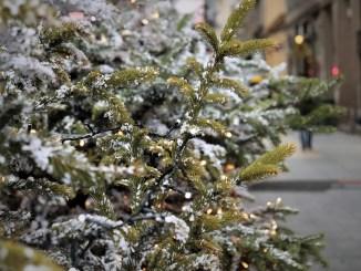 Weihnachtsbäume für Leuben und Prohlis gesucht
