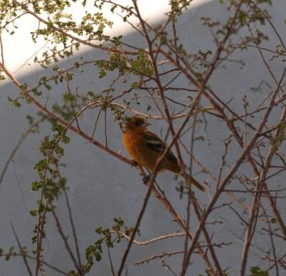 Yellow Bird at Fort Davis State Park