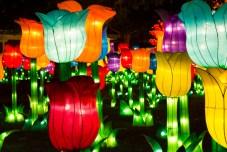 Tulips - Chinese Light Festival