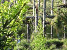 Sumpen - Gribskov er fuld af sumpområder