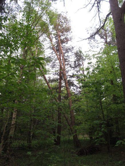 Godt jeg ikke skal under de træer, der er revet op af stormen og står i spænd