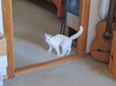 Bummm - lyd fra guitar anslået med kattehale
