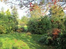Drejer mod nord og ser thujaen og en rød ahorn i et mellemrum, som iøvrigt lader lyset strømme ind om morgenen