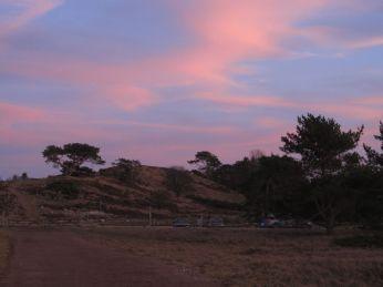 Det maleriske fyrretræ på Heatherhills sydlige del ser dramatisk ud mod den røde aftenhimmel