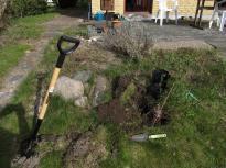 Graveede et hul og plantede - undrer mig, er det sådan man gør