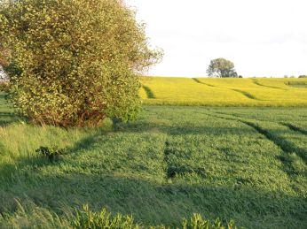 En bølgende grøn mark