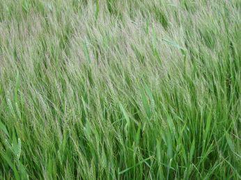 Jeg er fascineret af de tynde planter, der kan tåle regn og blæst uden at vælte