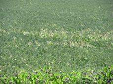 29.Juni: Zoom på græsaks som lyser i solen (og derfor stiller kameraet automatisk skarpt på dem)