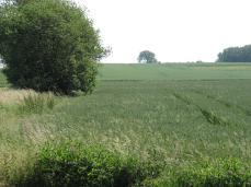 29.Juni: græsset stikker hovedet op