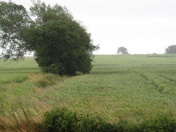 9. Juli: - køligt og småregn