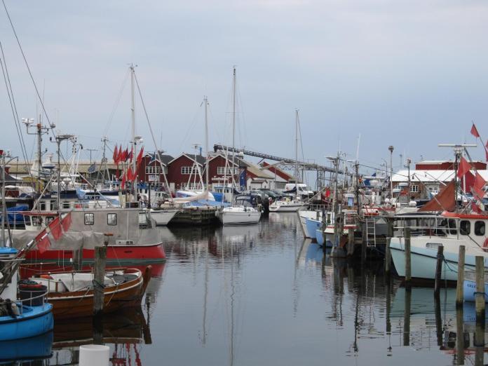 Det blanke vand og de mange skibe med kig over til havnekontoret