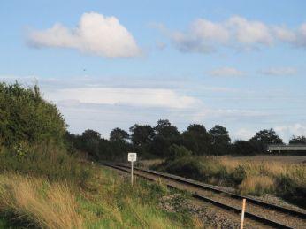 En lille falk, måske vandrefalk, ses langt væk under cumulus sky til venstre