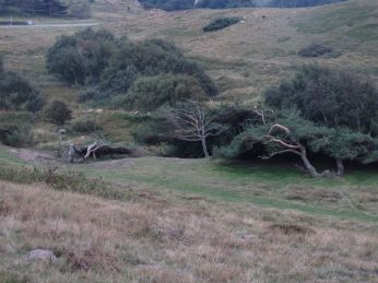 Oppe igen og et kig ned mellem de store morænebakker, en gryde med trollefyr