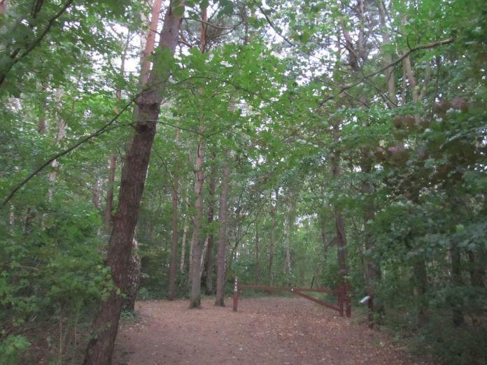 Den røde bom viser at det er en statsskov - det er et godt sted at gå en lille tur