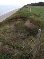 Ude ved skrænten er der et hul hvor generationer af spejdere har klatret op og ned af skrænten (færdsel forbudt) og dyr har ligget i læ dér - men selv dér gror det til med pionerplanter