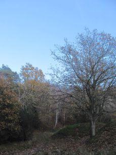 Her er Brantebjerg - skovvæsensmanden har igen fældet træerne, så der er udsigt! Hurra! Opigen