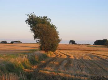 28.Juli, man kan se vårbyggen til venstre er kommet langt, men ellers viser billedet at vinterbyggen er høstet